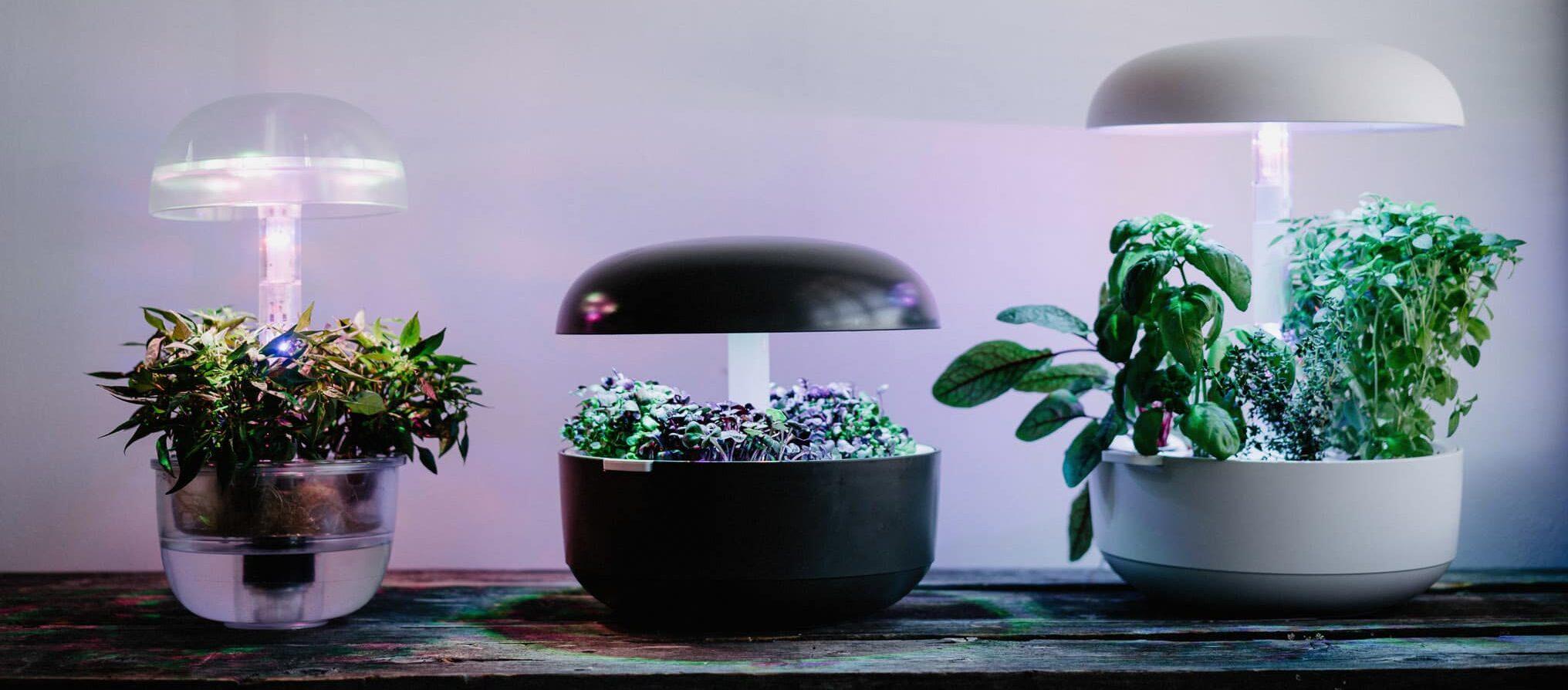 Plantuin kasvivalo: patentoitua teknologiaa kasvien parhaaksi
