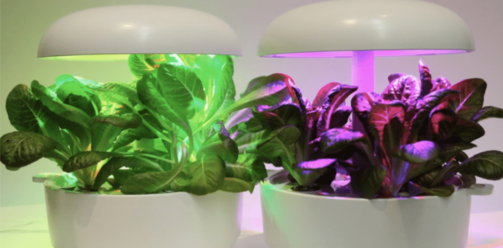 Optimising plant growth and development with lights