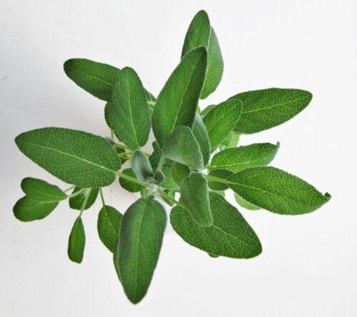 Explanation of Plants Scientific Names