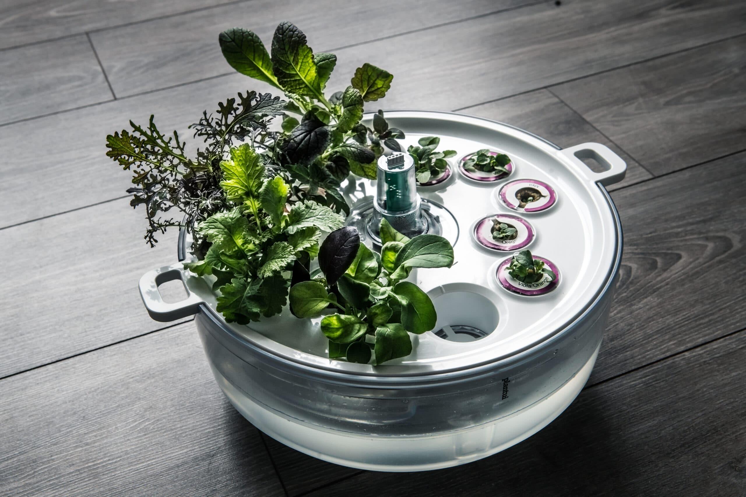 Taimien esikasvatus: näin saat terveet ja terhakat taimet nopeasti